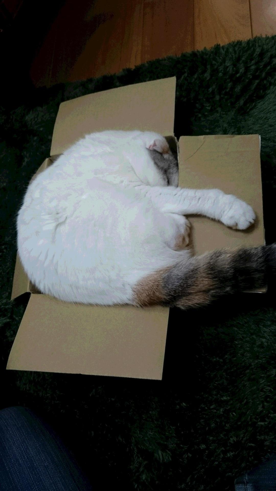 ももにゃんの箱2
