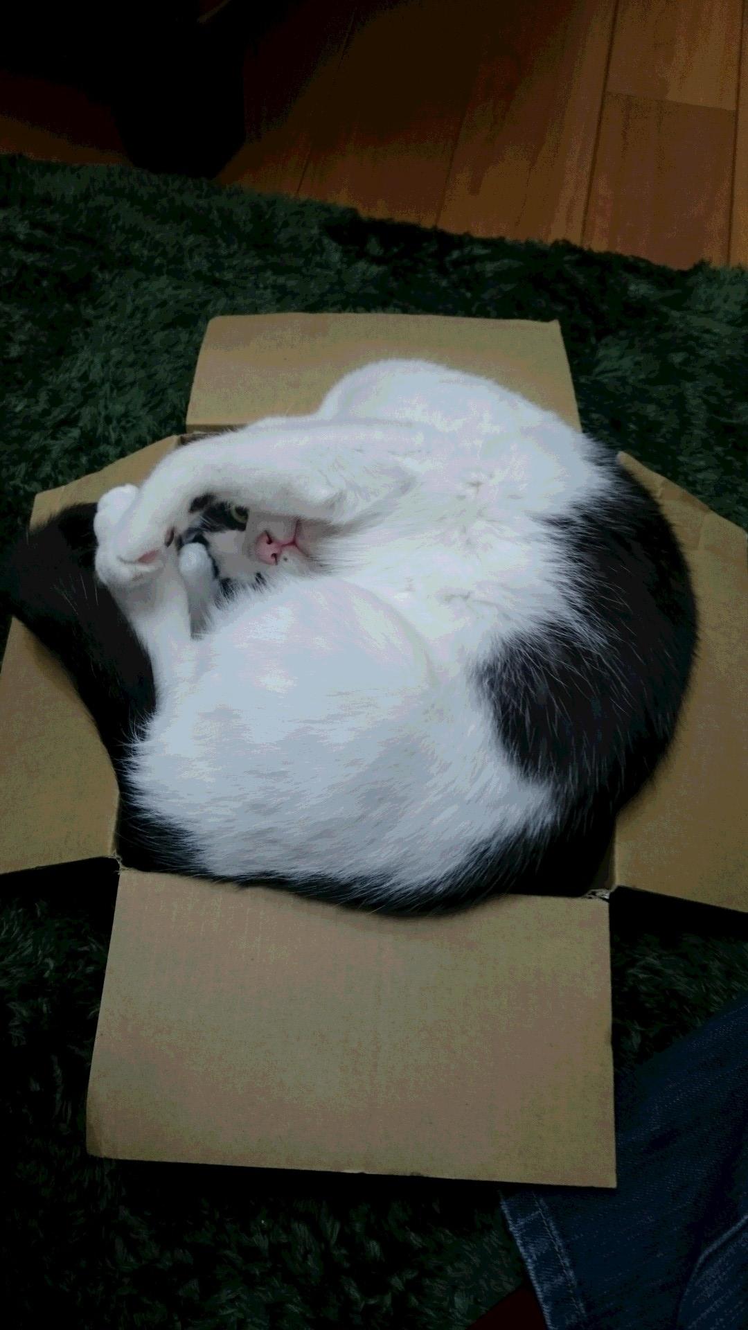 空くんの箱2