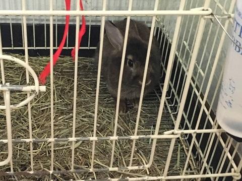 情縁閣ウサギ