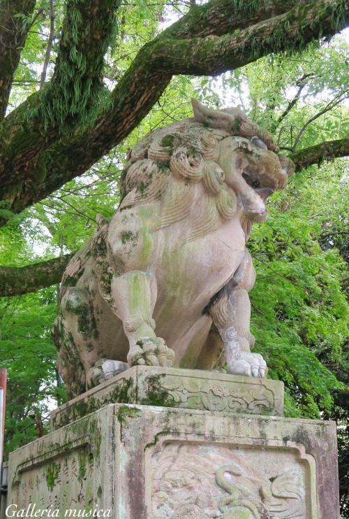 八坂神社 狛犬。8