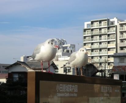 ようこそ鳥
