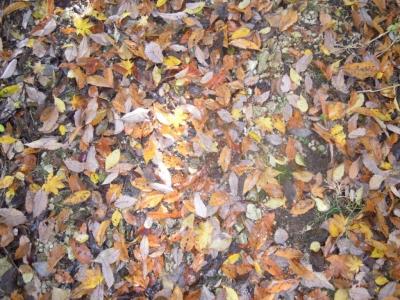 木の葉の道161122-1