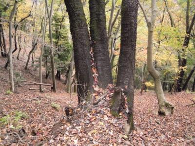ひたすら落ち葉の香り161122