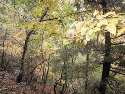 黄色が綺麗な木々161122