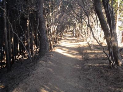 歩きやすい道が続く170105