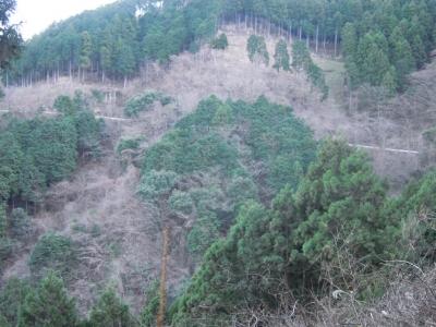 大山の旧道に出る林道170105