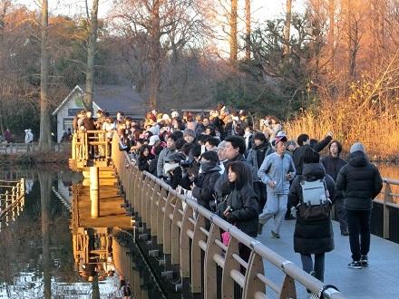 初日の出七井橋