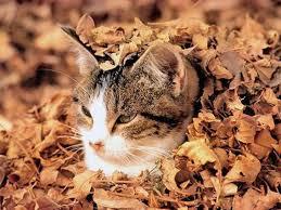 落ち葉の蒲団(猫)