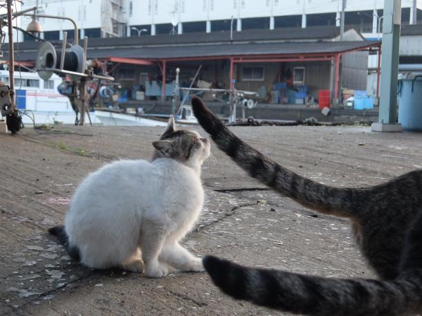 猫2,3,4