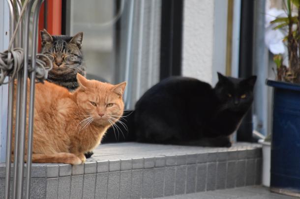 猫4,5,6
