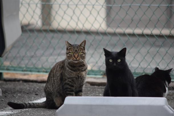 猫16,17,18