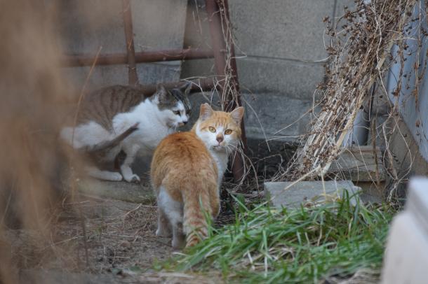 猫21,22