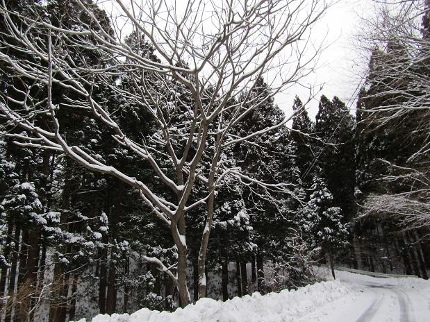 冬の装い1