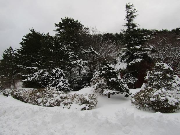 冬の装い3