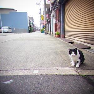 お散歩6ねこ3