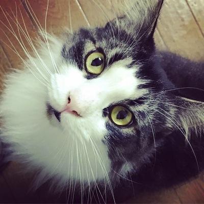 猫サロンのこ