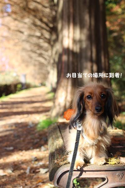 2016-12-sagamihara12.jpg