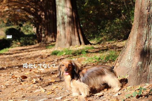 2016-12-sagamihara16.jpg