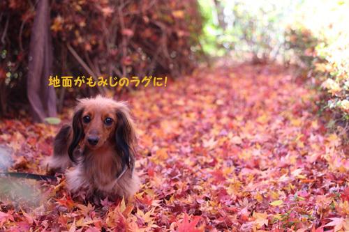 2016-12-sagamihara2.jpg