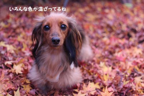 2016-12-sagamihara4.jpg