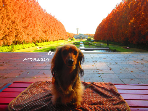 2016-12sagamihara26.jpg
