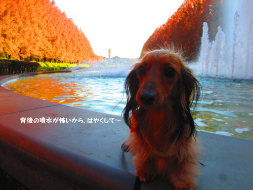 2016-12sagamihara29.jpg