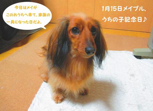 3y-uchinoko1.jpg