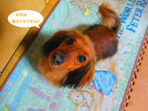 3y-uchinoko11.jpg