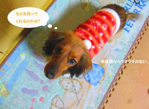 3y-uchinoko3.jpg