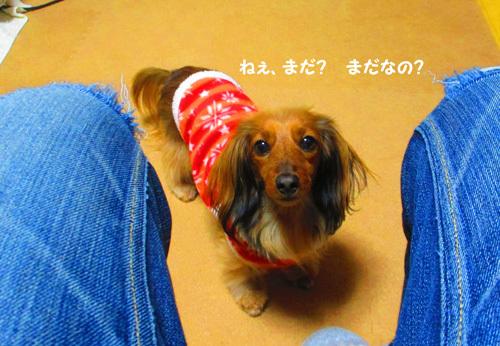 3y-uchinoko5.jpg