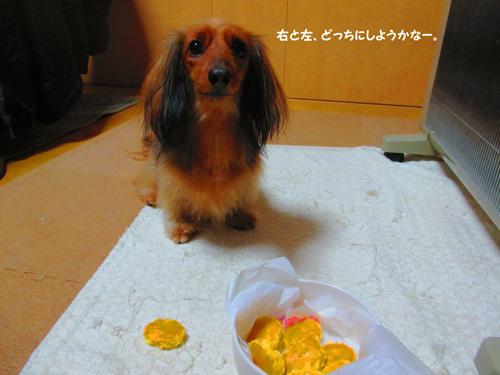 3y-uchinoko9.jpg