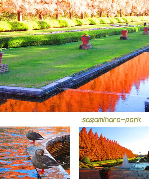 sagamihara-park.jpg