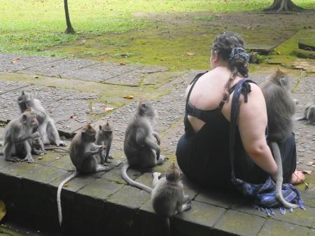 観光客にも平気な猿
