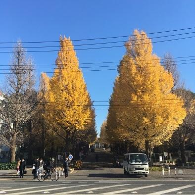 日吉銀杏並木