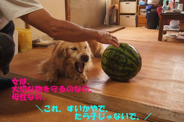 DSC06978.jpg