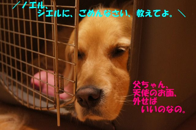DSC0983a4.jpg