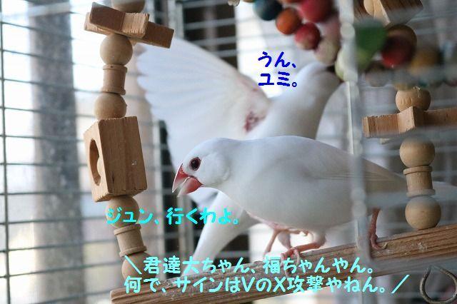 IMG_2208_20170103185738d58.jpg