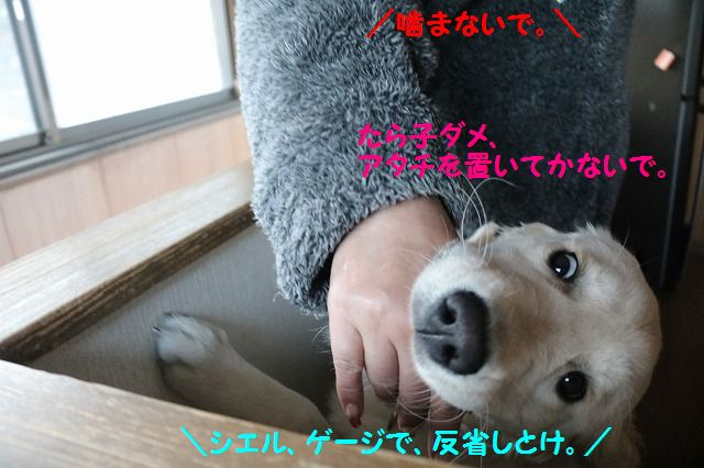 IMG_2323_20170106210839087.jpg