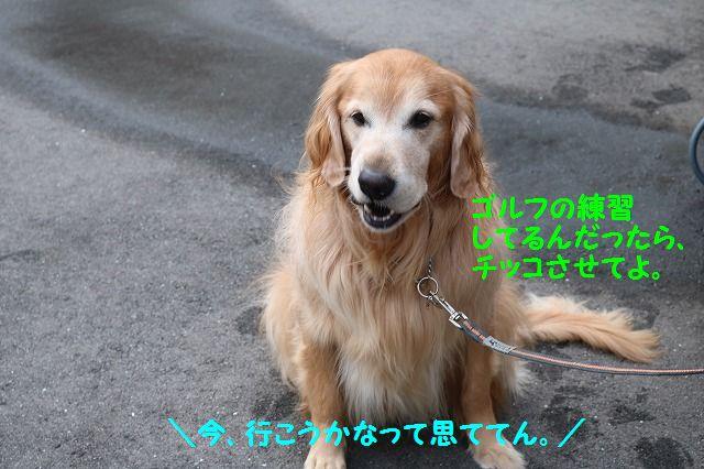 IMG_2407_20170107221742b03.jpg