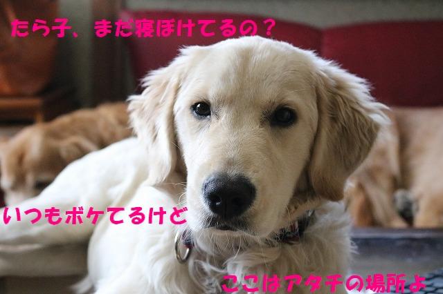 IMG_2669_1.jpg