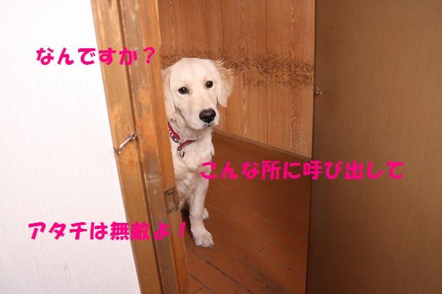 IMG_2686_201701111732365df.jpg
