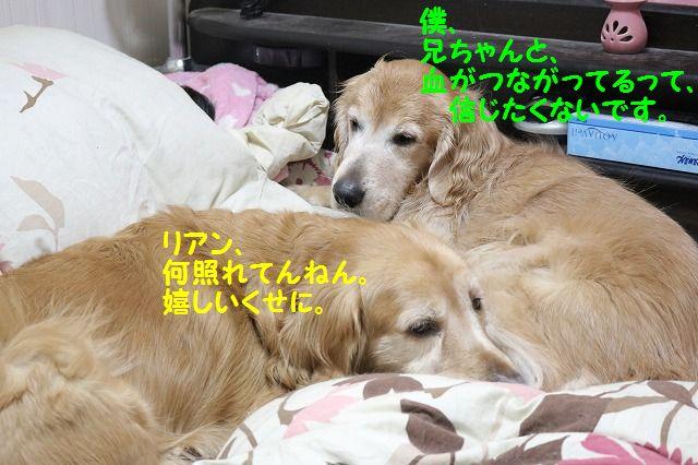 IMG_3211_20170120232826d45.jpg