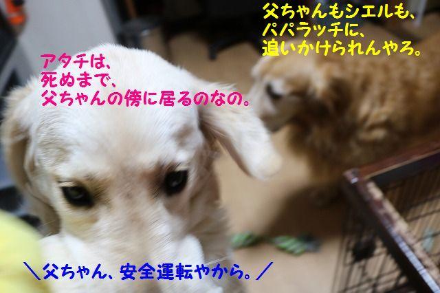 IMG_323a8.jpg