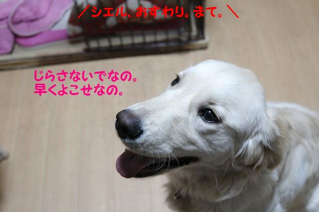 IMG_3394.jpg