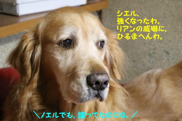 IMG_3528_201701252235003a4.jpg