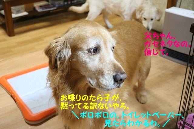IMG_3549_201701252235038d2.jpg