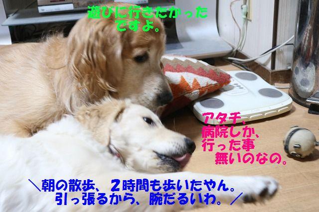 IMG_3703_201701292356033fa.jpg