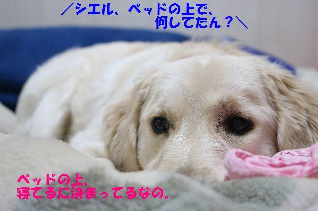 IMG_4114.jpg