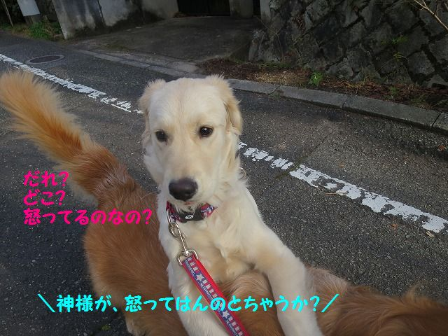 IMG_9226_20170102182501a0c.jpg