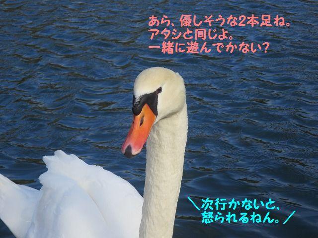 IMG_9253_2017010621085495e.jpg